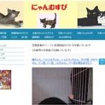 ブログ - 猫の里親募集