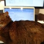 パソコンのキーボードで寝るムウ
