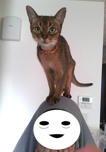 ジャミラ猫2