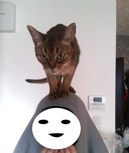 ジャミラ猫1