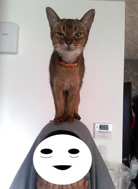 ジャミラ猫3