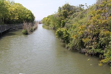 謎公園の川