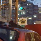 クロネコの旗と猫2匹