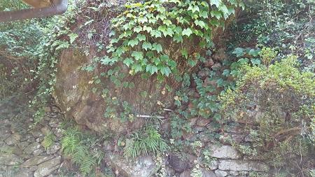山の植物たくさん