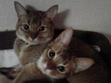 セシリー 猫