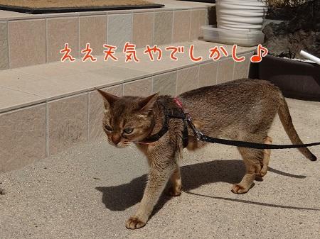 プルちゃんお散歩1
