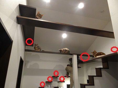 猫たちの粗相ポイントと掃除する妻