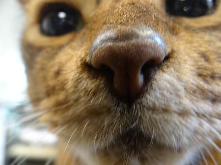 ヒイくんの鼻