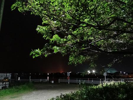 夜の桜の木1