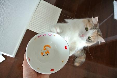 オーダー猫用食器マウちゃん2