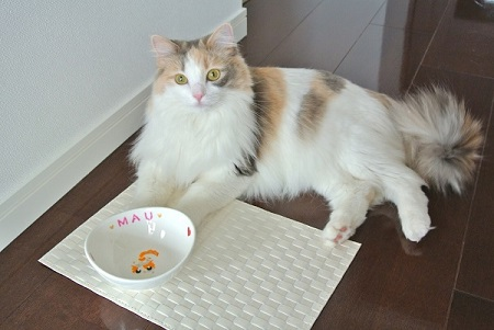 オーダー猫用食器マウちゃん1
